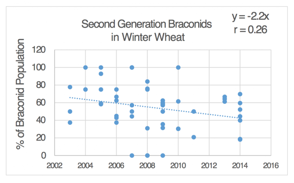 Second Generation Branconids in Winter Wheat
